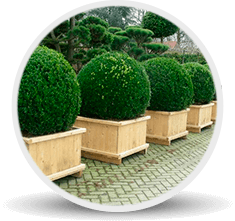 Catalog icon outdoor plants