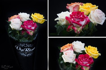 Thumb rose from holland 1496400747